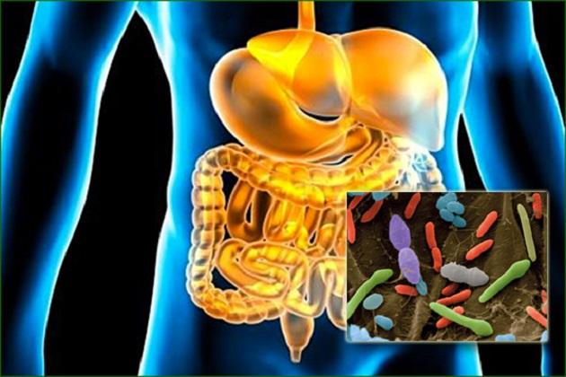 NT123_flore-intestinale